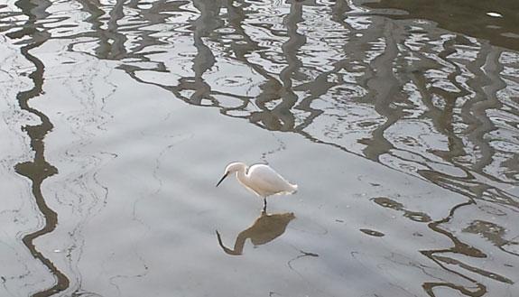 shelter island egret